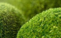 Conheça a diferença entre grama sintética e grama artificial
